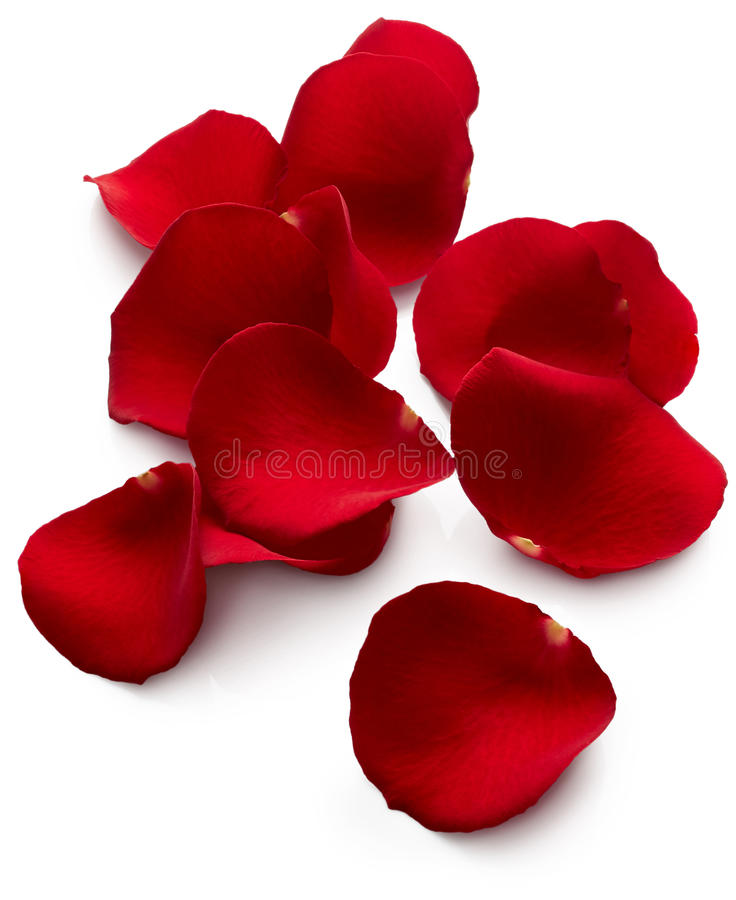 As pétalas do vermelho levantaram-se fotografia de stock