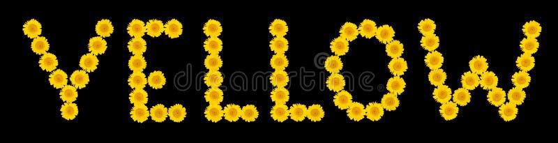 As palavras AMARELAS são compostas de flores brilhantes, amarelas do crisântemo em um fundo isolado preto Macro Modo do ver?o ilustração stock