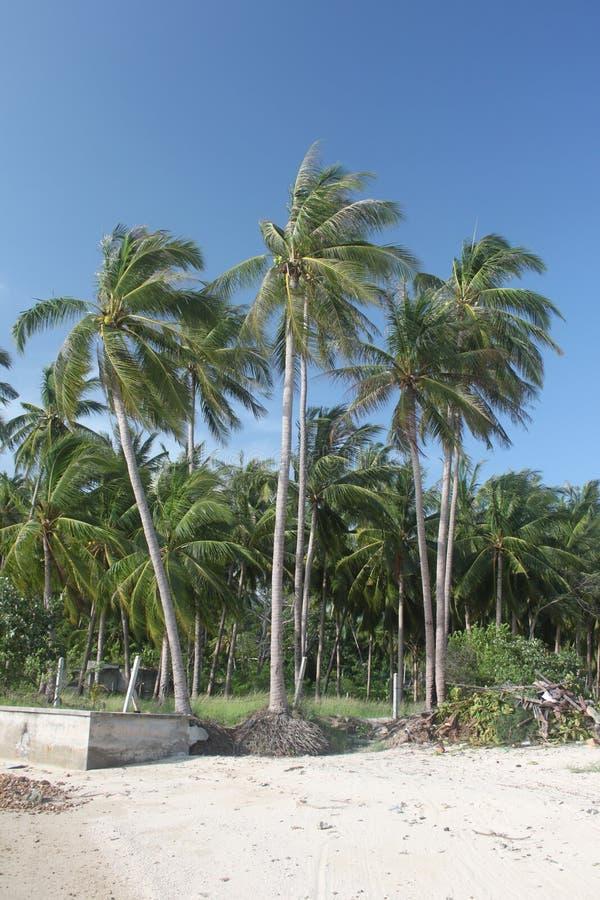 As palmas da selva e a floresta da selva em uma areia encalham na ilha de Koh Samui em Tailândia fotografia de stock