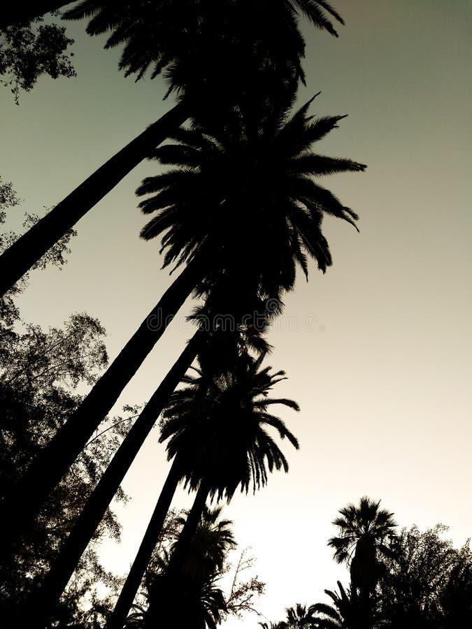 As palmas livram imagem de stock royalty free