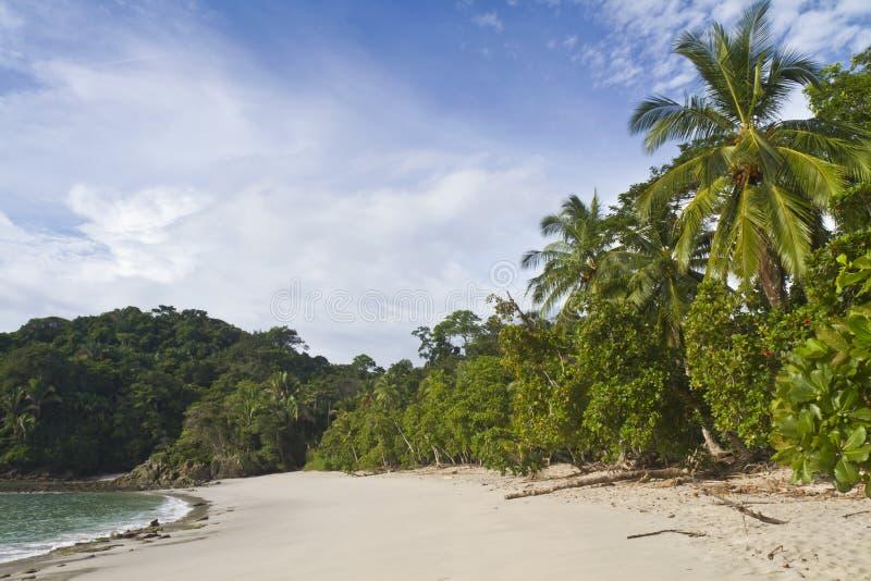Playa Manuel Antonio & palmeiras foto de stock