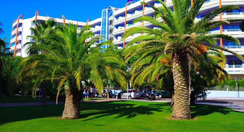 As palmeiras aproximam o hotel fotografia de stock royalty free