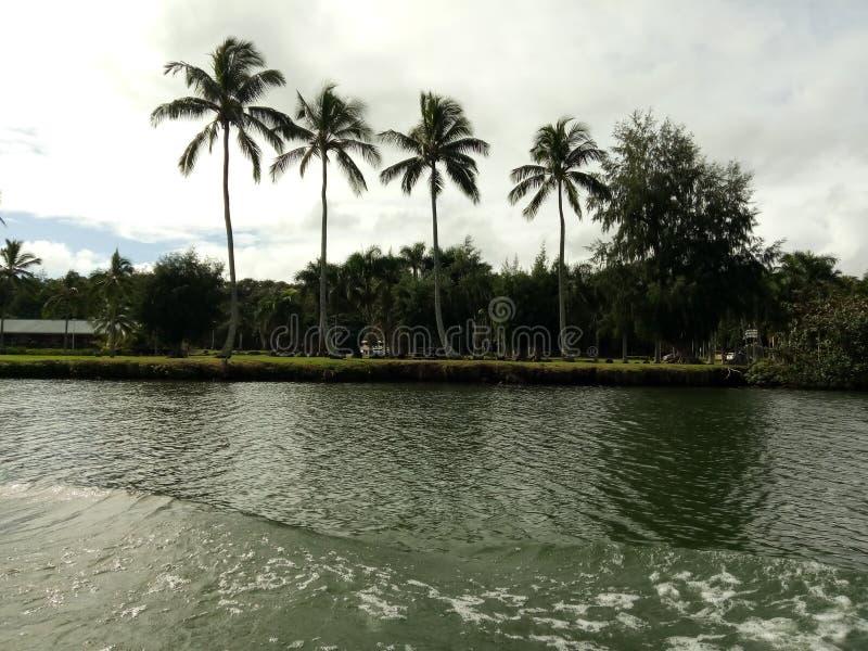 As palmeiras dizem o bom dia fotografia de stock royalty free