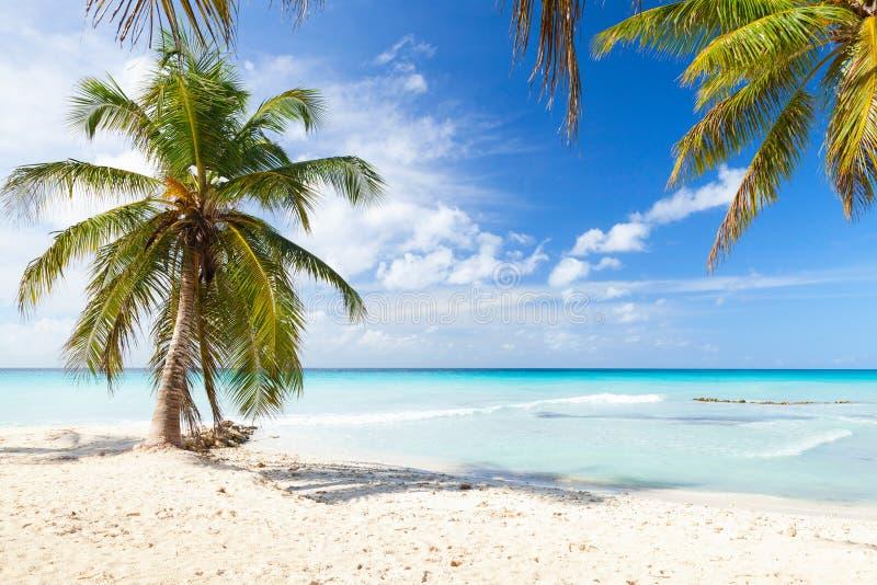As palmeiras do coco crescem no Sandy Beach branco imagens de stock royalty free