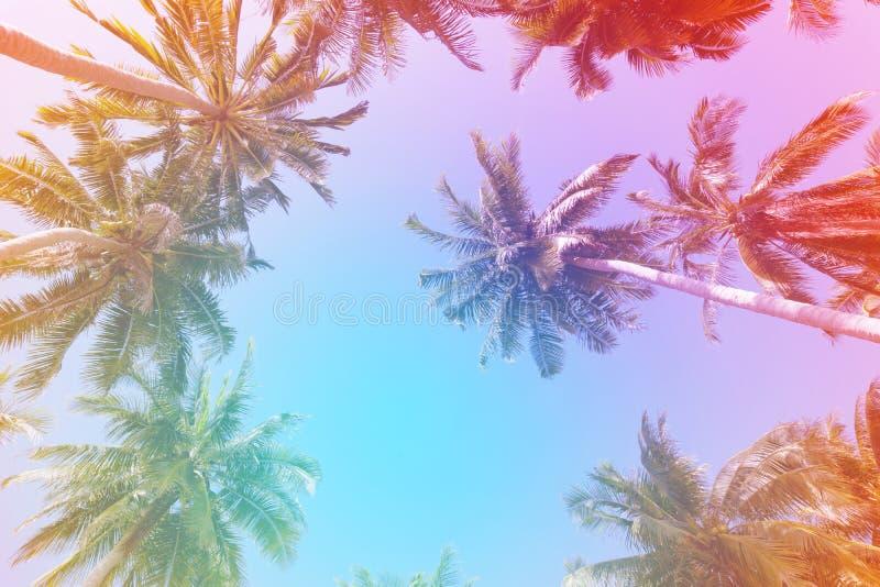 As palmeiras do coco no vintage do fundo do céu azul filtram o chiqueiro fotos de stock royalty free