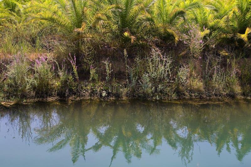 As palmeiras e outras plantas exóticas são refletidas na água imagens de stock royalty free