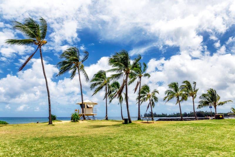 As palmeiras e a salva-vidas elevam-se na praia tropical em Haleiwa foto de stock royalty free