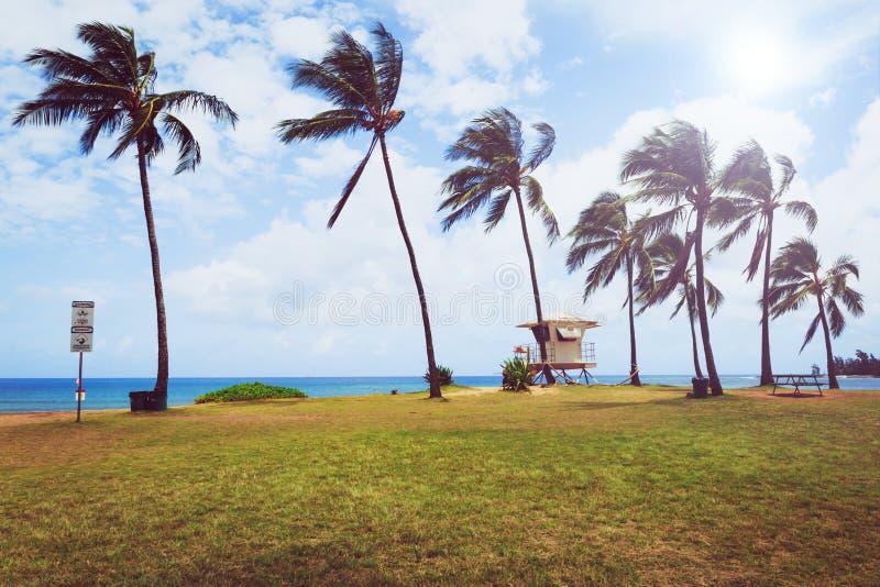 As palmeiras e a salva-vidas elevam-se na praia tropical em Haleiwa foto de stock