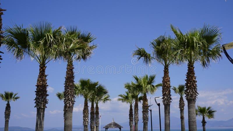 As palmeiras exóticas olham como um cartão fotos de stock