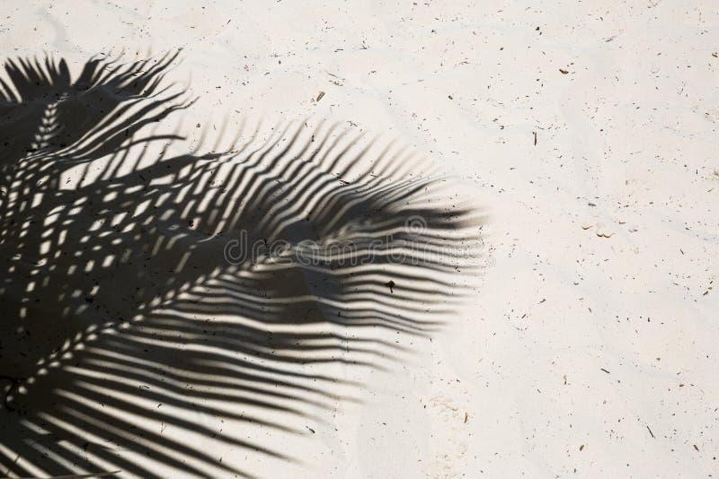 As palmeiras moldaram sombras na areia dourada lisa de uma praia tropical remota da ilha na república Dominicana imagem de stock