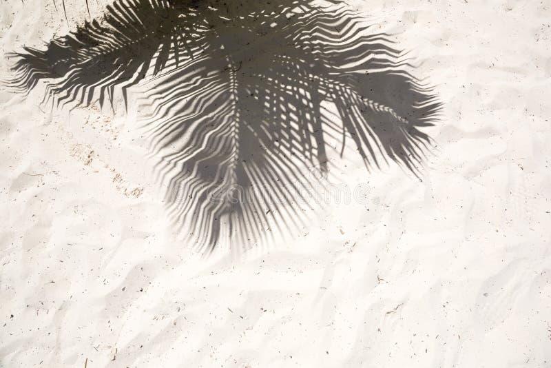 As palmeiras moldaram sombras na areia dourada lisa de uma praia tropical remota da ilha na república Dominicana imagens de stock