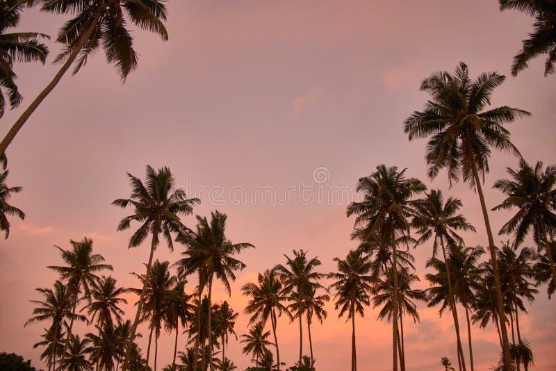 As palmeiras mostram em silhueta na praia tropical do por do sol em Midigama, Sri Lanka imagem de stock