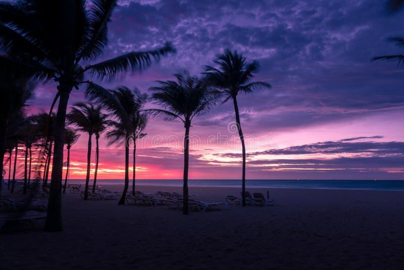 As palmeiras mostram em silhueta no por do sol na ilha tropical fotos de stock royalty free