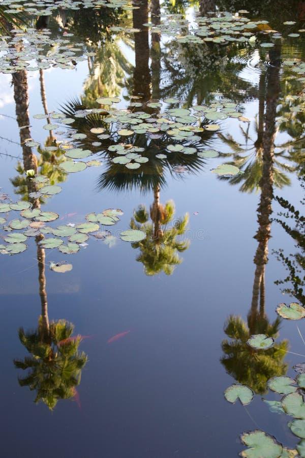 As palmeiras refletiram em uma lagoa com waterlilies e peixe dourado imagem de stock