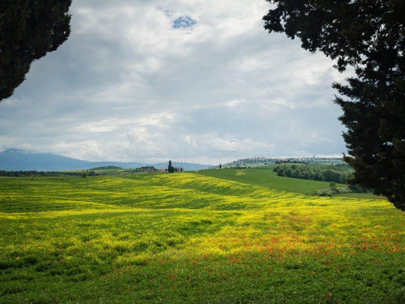 As papoilas são um campo em Toscânia, Itália fotos de stock royalty free