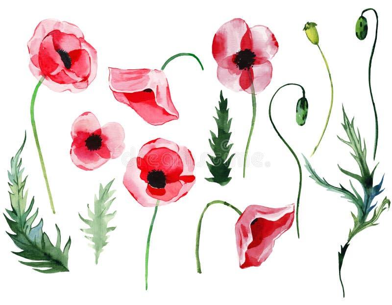 As papoilas vermelhas florais ervais do outono maravilhoso bonito brilhante do verão florescem com elementos sem emenda das folha ilustração do vetor