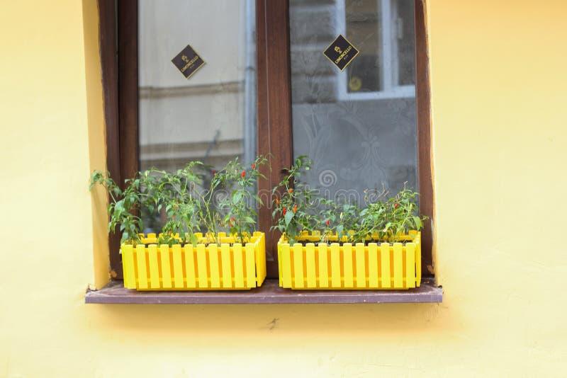As paredes amarelas da entrada clássica da casa do estilo, a porta de madeira e as janelas decoram com vasos de flores e a bicicl fotos de stock royalty free