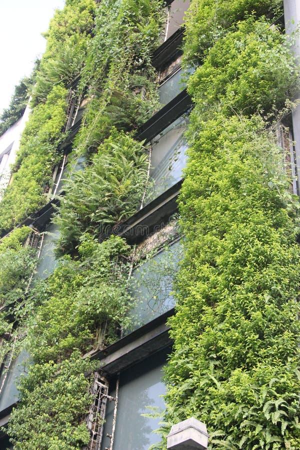 As paredes exteriores e as plantas verdes imagem de stock
