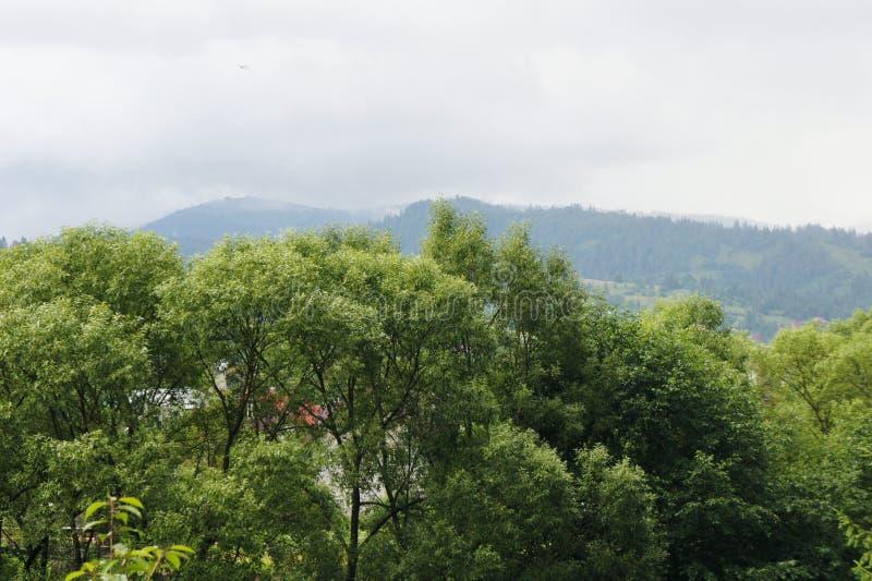 As partes superiores das árvores e do céu, as montanhas são azuis paisagem da floresta na distância Ucrânia, Carpathians foto de stock