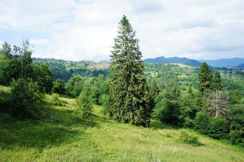 As partes superiores das árvores e do céu, as montanhas são azuis paisagem da floresta na distância Ucrânia, Carpathians fotografia de stock