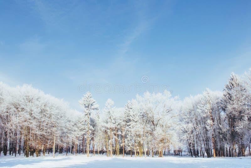 As partes superiores das árvores na neve Neve congelada em árvores Árvores congeladas em um fundo do céu nebuloso azul imagens de stock