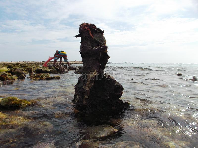 As pedras cobriram com a alga na costa da ilha da tartaruga na Venezuela imagem de stock