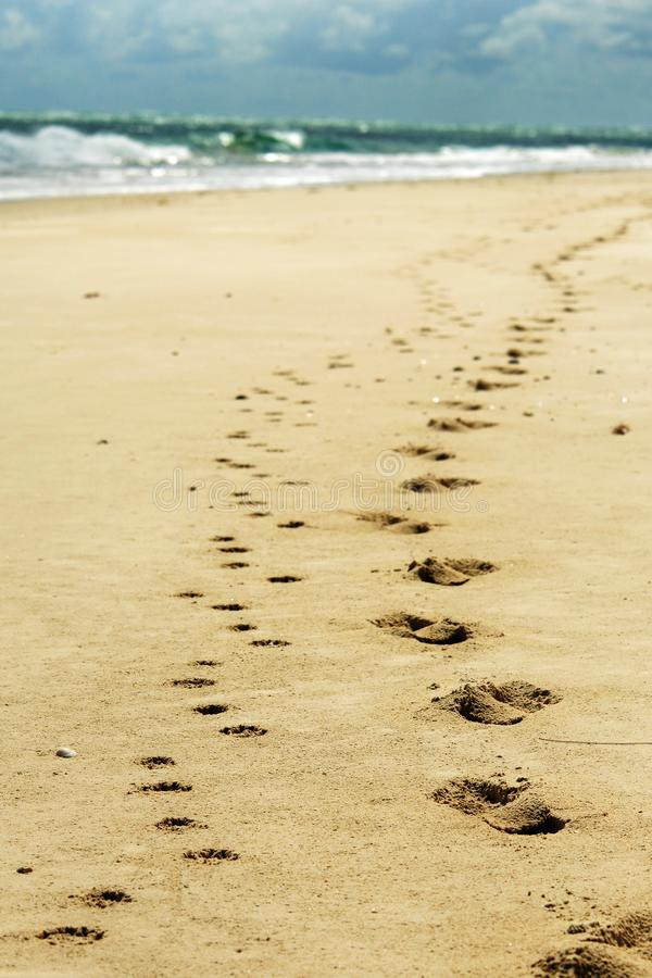 As pegadas do ser humano e do cão na areia da praia telefonam ao papel de parede imagens de stock