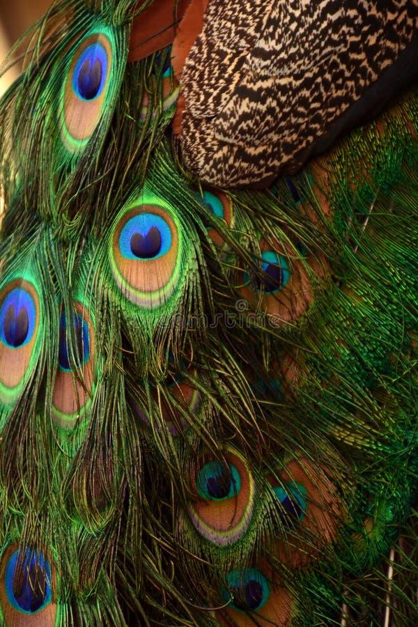As penas do pavão fecham-se acima da vista fotografia de stock royalty free