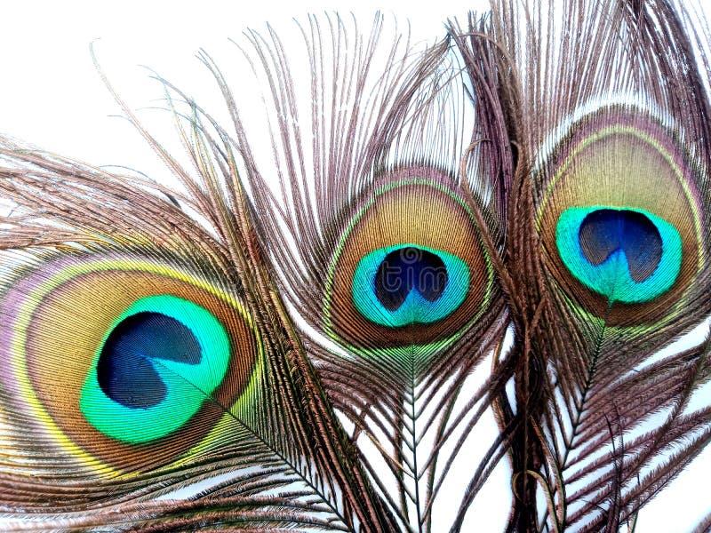 As penas do pavão fecham-se isolado acima em um fundo branco fotografia de stock royalty free