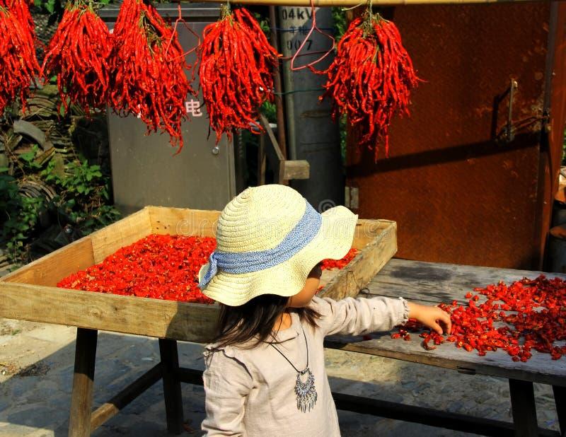 As pimentas são vermelhas foto de stock
