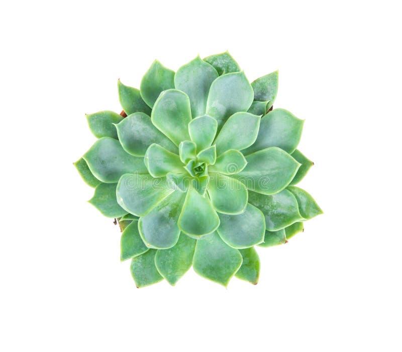 As plantas carnudas plantam no potenciômetro no fundo, nas despesas gerais ou na parte superior branca vi imagem de stock royalty free