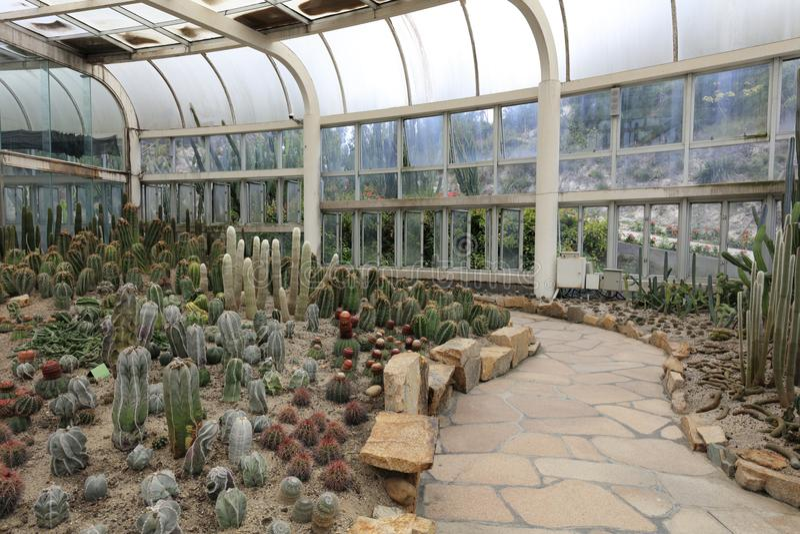 As plantas da planta carnuda na casa de vidro grande, adôbe rgb imagens de stock royalty free