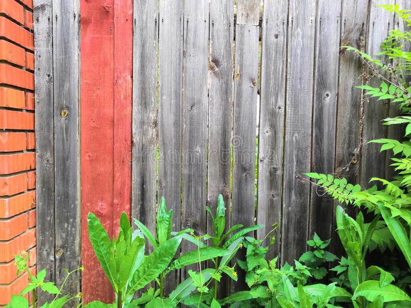 As plantas de jardim de Beautyful deixam a folha verde a planta floral natural e a cerca de madeira marrom cinzenta na luz solar fotos de stock royalty free