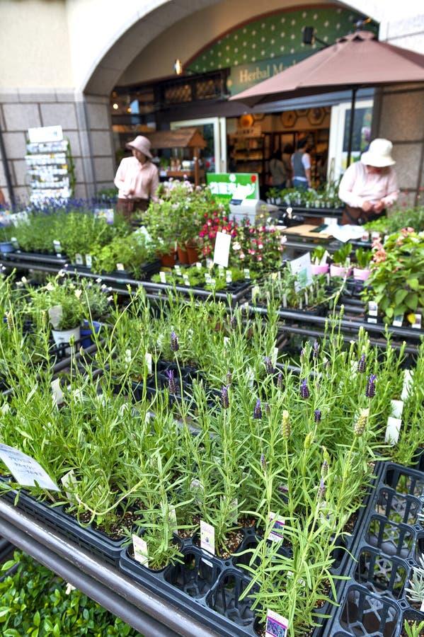 As plantas ervais venderam no mercado erval, Nunobiki Herb Garden na montagem Rokko em Kobe, Japão imagem de stock royalty free