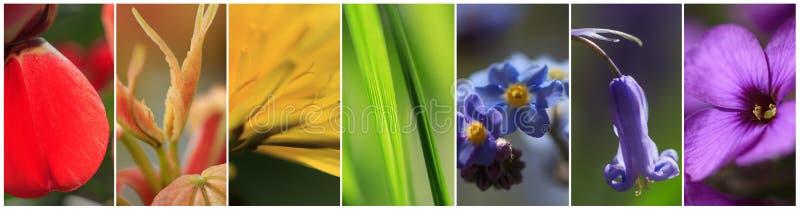 As plantas nas cores do arco-íris fotos de stock