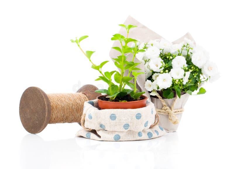 As plantas novas no pacote ofereceram para a venda imagens de stock