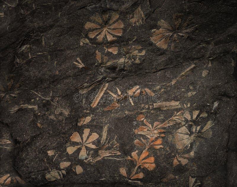 As plantas pré-históricas antigas endureceram-se em uma parte de carvão foto de stock