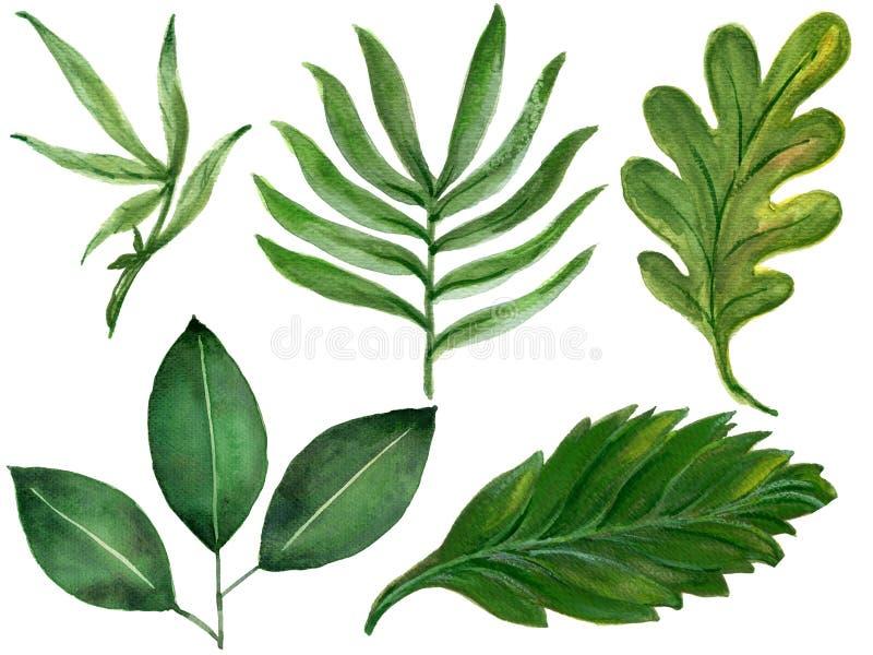 As plantas tropicais tiradas mão da aquarela ajustaram a mão exótica dracma das folhas ilustração stock