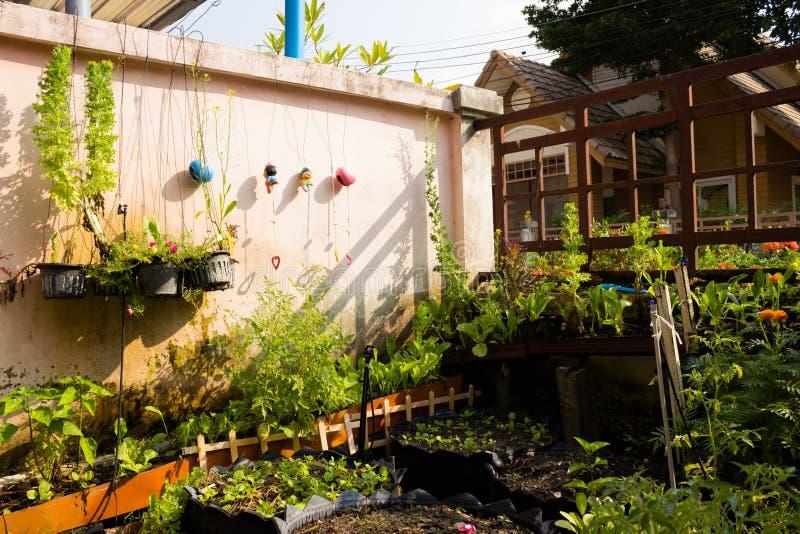 As plantas, vegetais imagens de stock royalty free