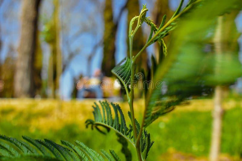 As plantas verdes da mola imagem de stock royalty free