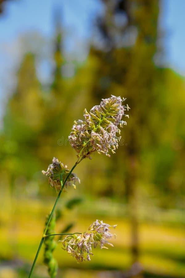 As plantas verdes da mola imagens de stock royalty free