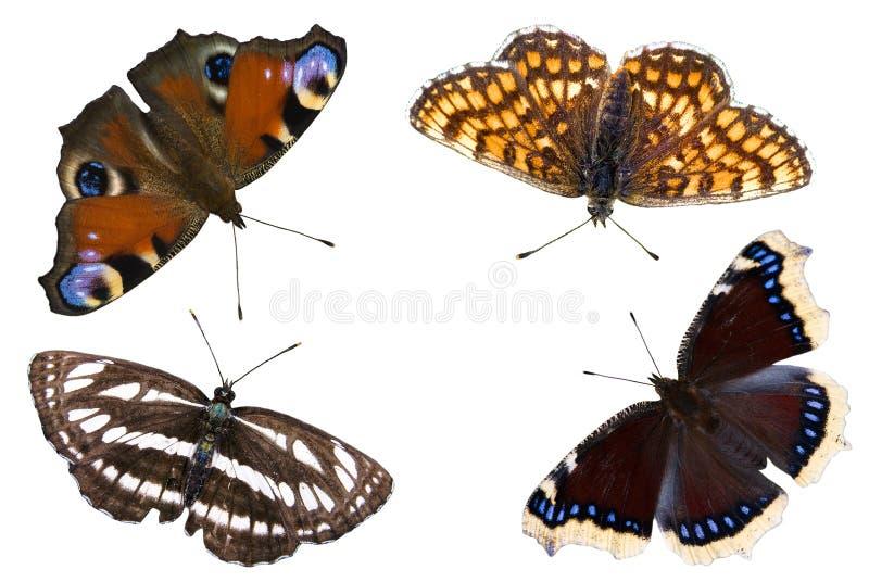 As quatro borboletas fotografia de stock royalty free