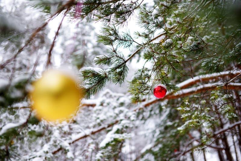 As quinquilharias amarelas e vermelhas coloridas do Natal que penduram em ramos de árvore no inverno estacionam imagem de stock