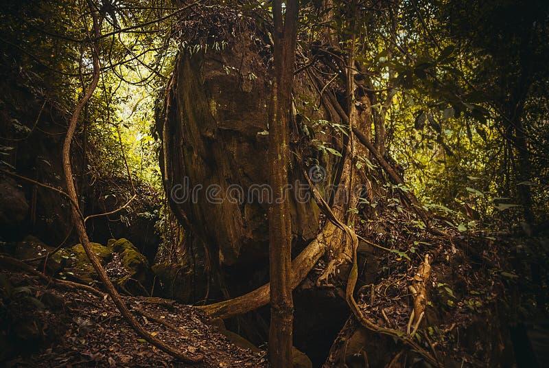 As raizes das árvores na selva Paisagem tropical da floresta úmida da floresta tropical da natureza Malásia, Bornéu, Sabah fotos de stock