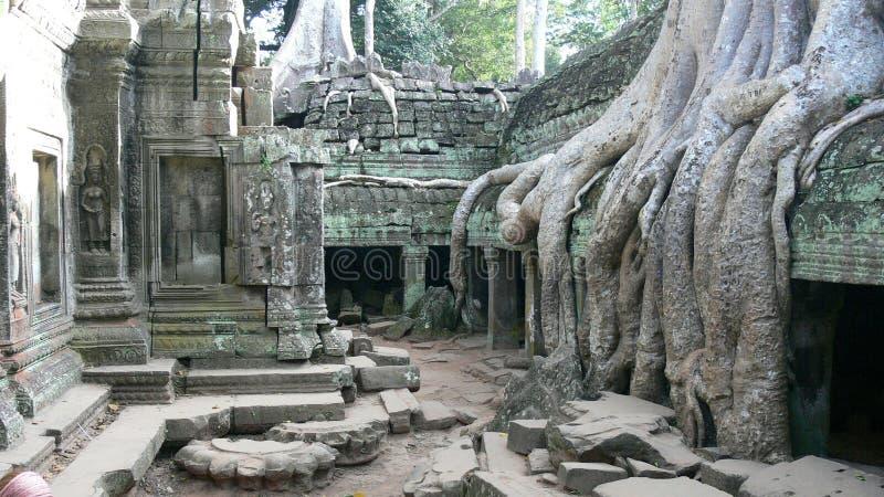 As raizes enormes da árvore ocuparam o templo antigo do Khmer em Angkor, Camboja fotos de stock royalty free