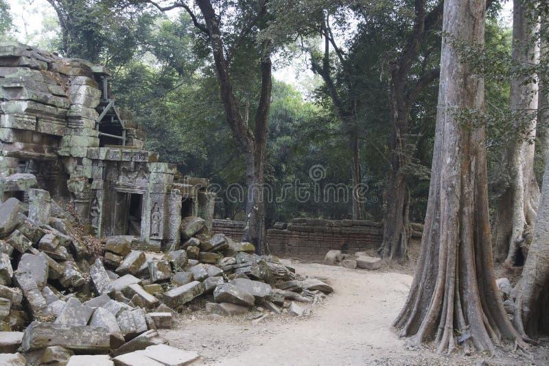 As raizes enormes da árvore tragam o templo arruinado de Ta Prohm fotos de stock