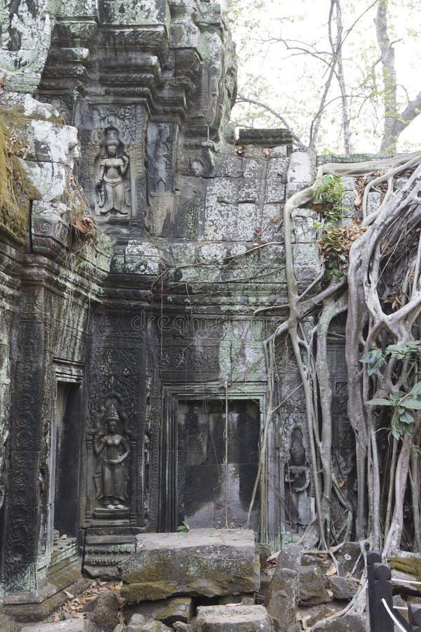 As raizes enormes da árvore tragam o templo arruinado de Ta Prohm foto de stock royalty free
