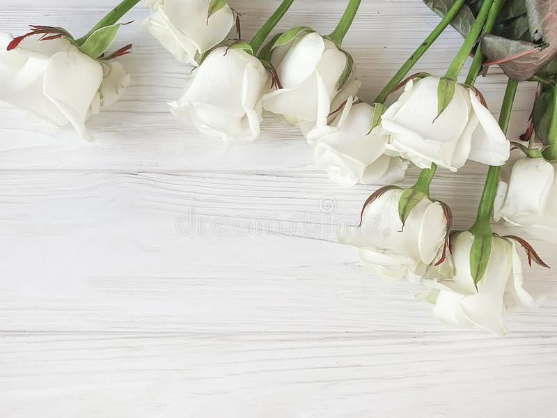 As rosas bonitas florescem beira romântica no quadro de madeira branco do fundo imagem de stock royalty free