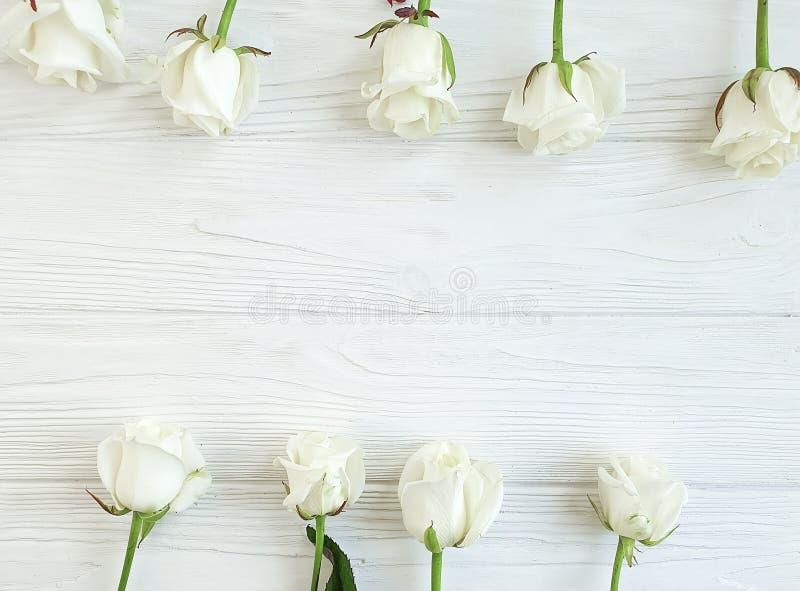 As rosas bonitas florescem cumprimentando a beira romântica do verão no quadro de madeira branco do fundo imagens de stock