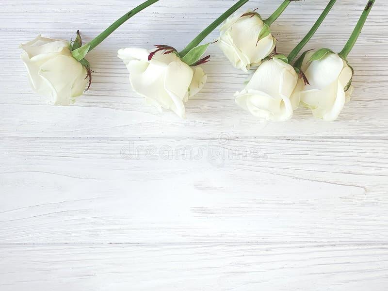 As rosas bonitas florescem cumprimentando a beira romântica no quadro de madeira branco do fundo foto de stock royalty free